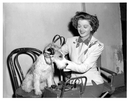 the thin man goes home 1945 mryna loy with asta